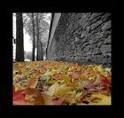 l'automne sur les trottoirs