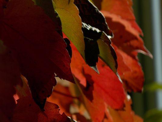 L'automne tout en feuille