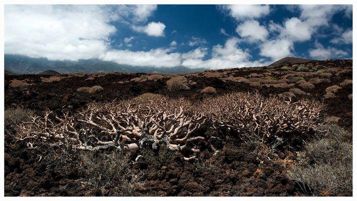 Lava Landschaft