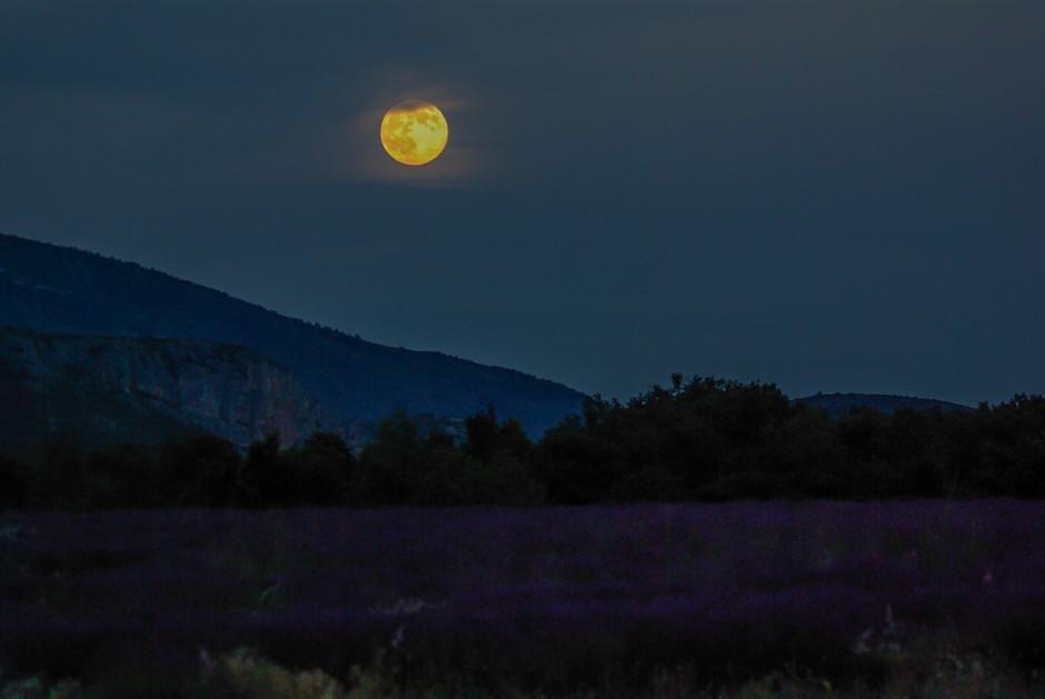 Lavendel-Mond