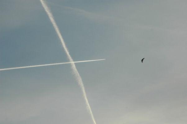 L'avion est grand,mais petit comme l'oiseau.