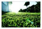 Lawn_