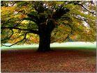 Laxenburg Park NÖ Herbststimmung
