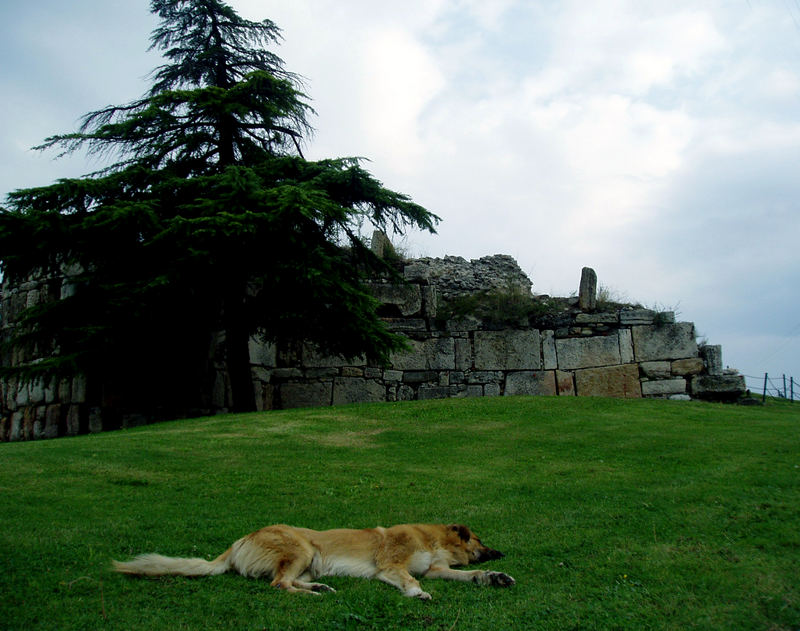lazy dog.... :)