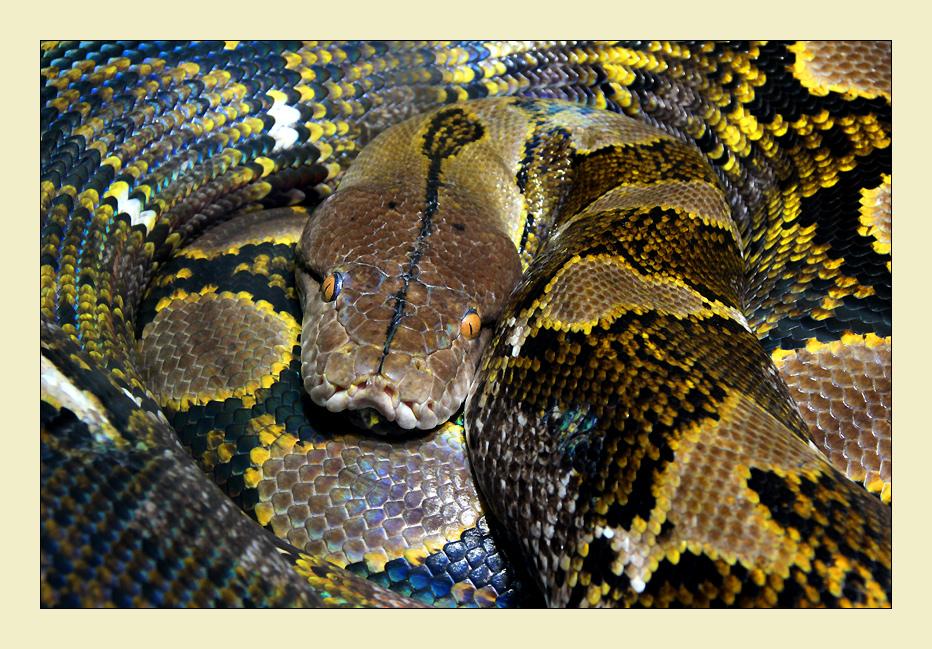 ~ lazy snake ~