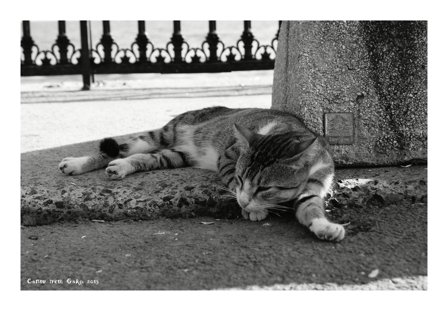 Lazy Street Cat in the Shadow