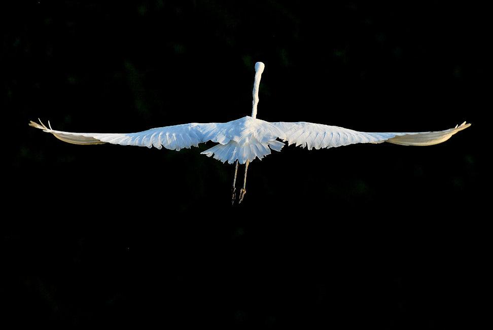 Le ali