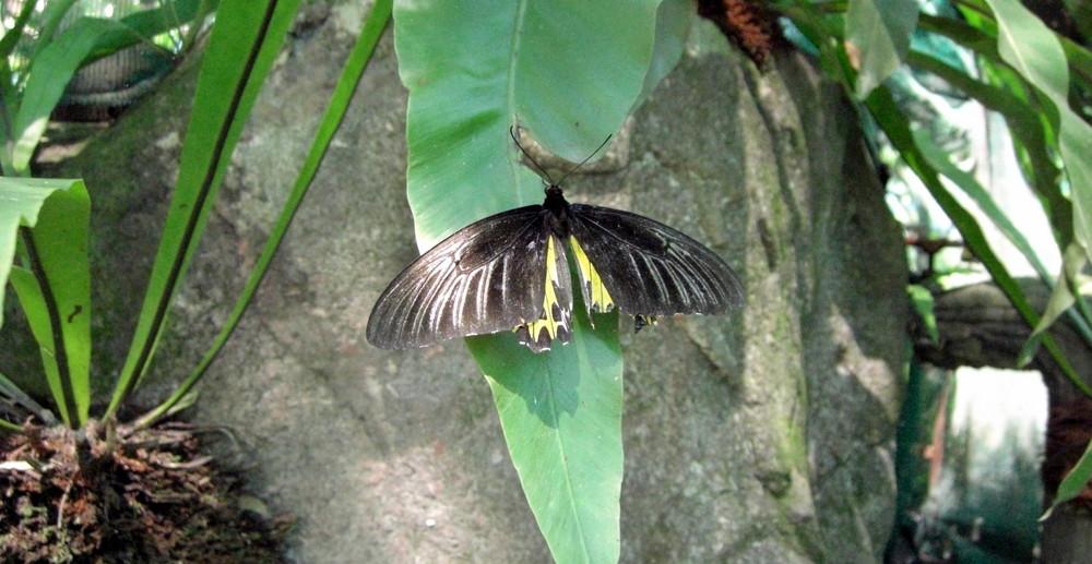 Le ali spezzate