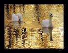 le bain d `or