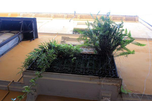 Le balcon aux arbres
