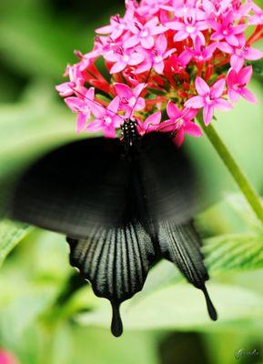 le battement d'ailes