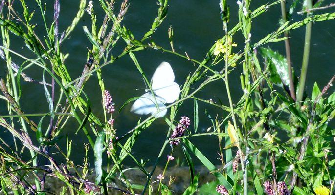 le battement d'ailes d'un papillon....