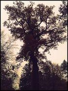 le Baum