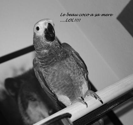 Le beau bebe perroquet ...