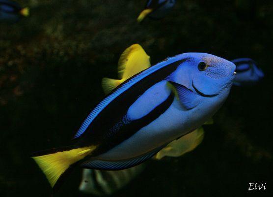 Le beau bleu