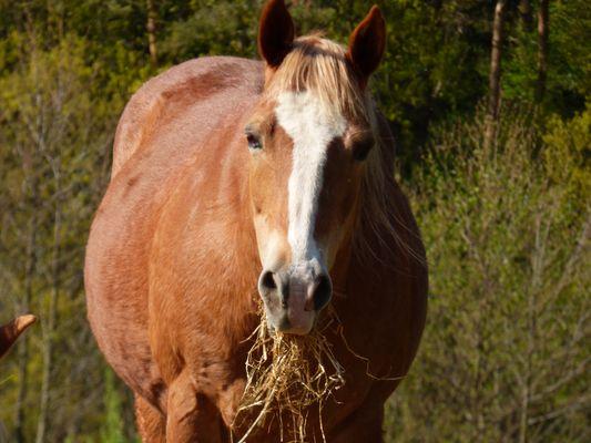 Le beau cheval