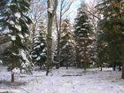 le blanc manteau de la forêt de fontainebleau
