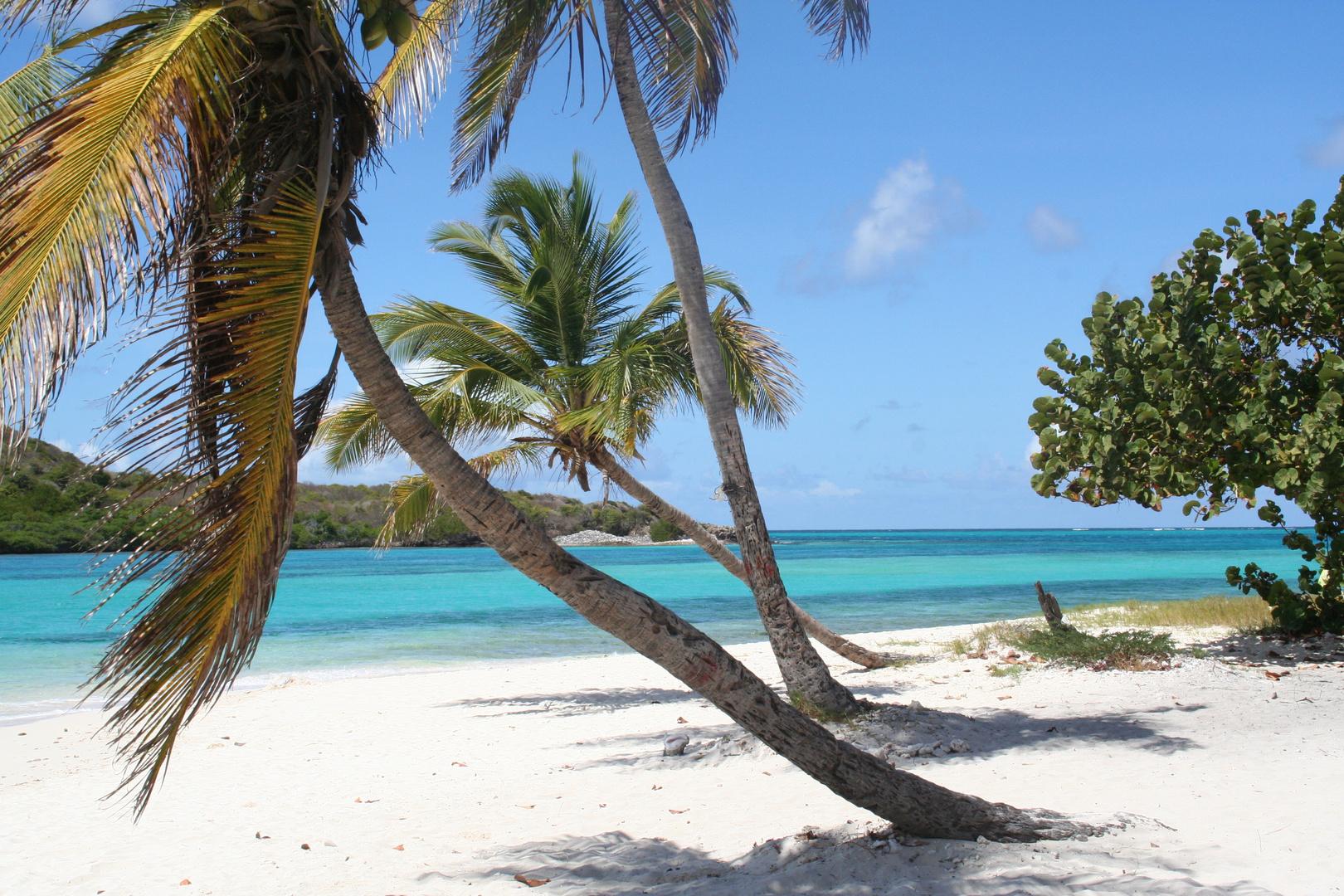Le bleu de Tobago Cays