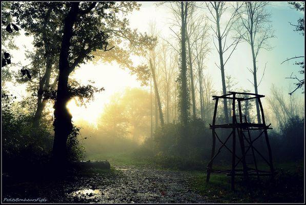Le bois au petit matin...