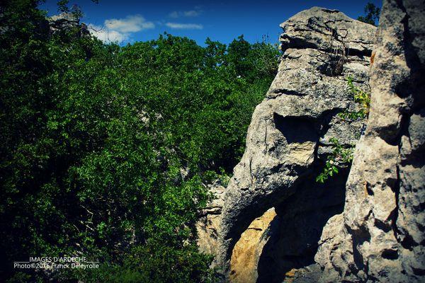 Le bois de Païolive (l'éléphant, Ardèche)