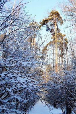 Le bois d'hiver
