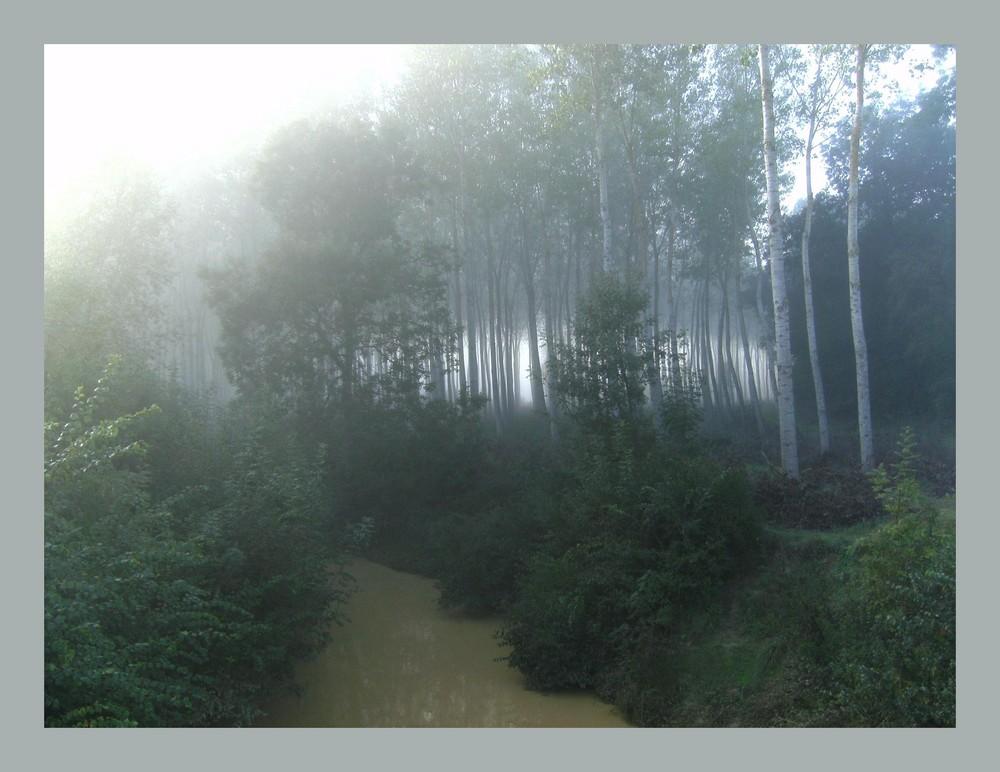 le bois du pont des 1000 kilomètres