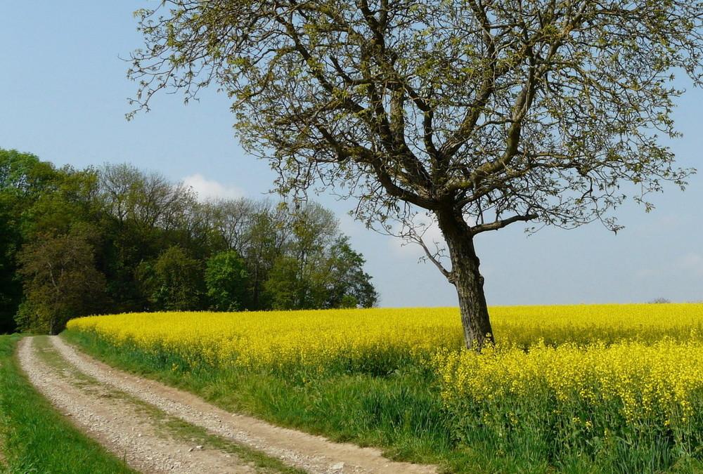 Le bonheur est dans la nature... 2