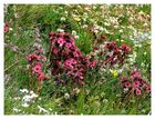 ...Le Bouquet...