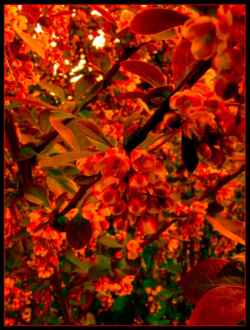 Le bouquet rouge