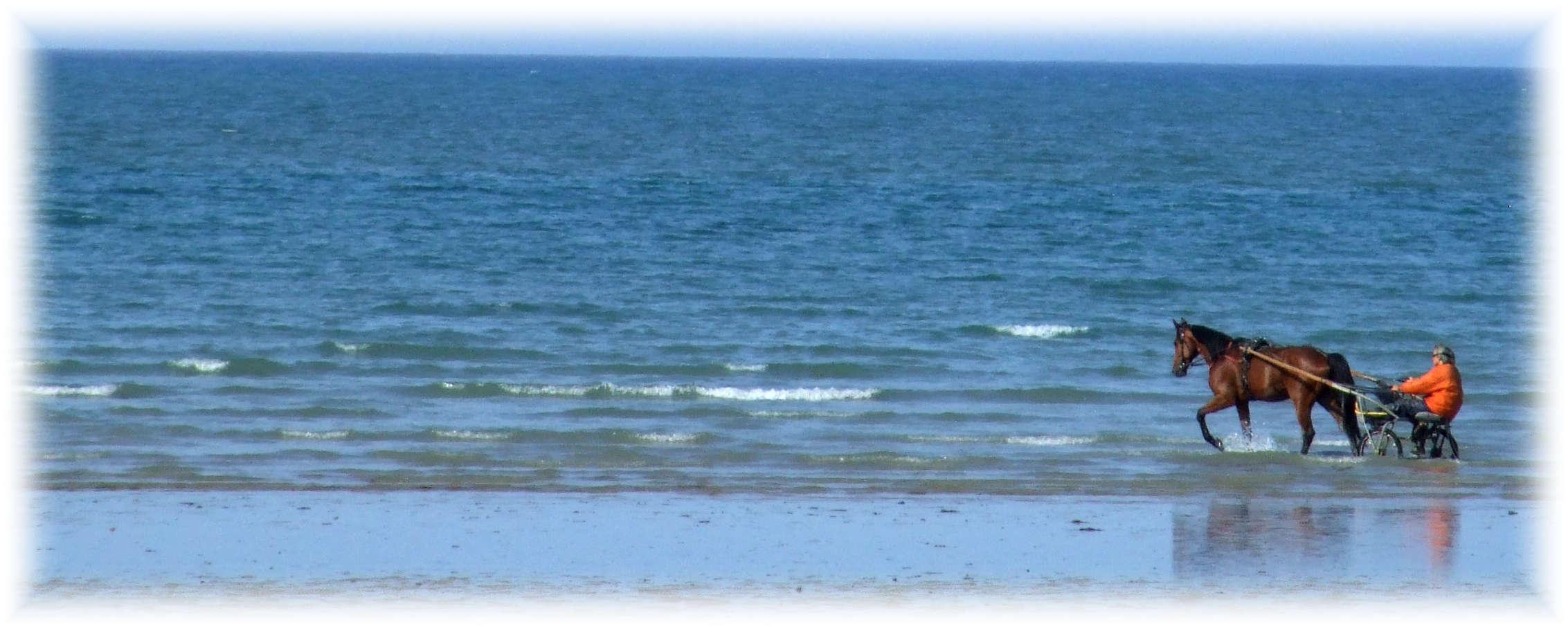 le cavalier des océans