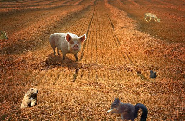 Le champ des animaux heureux