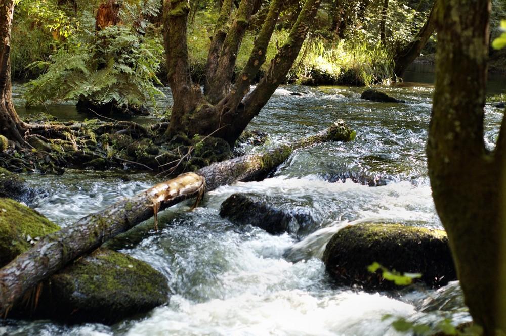 Le chant de l'eau vive