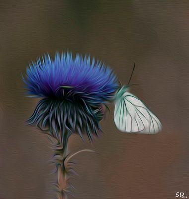 le chardon bleu et le papillon blanc