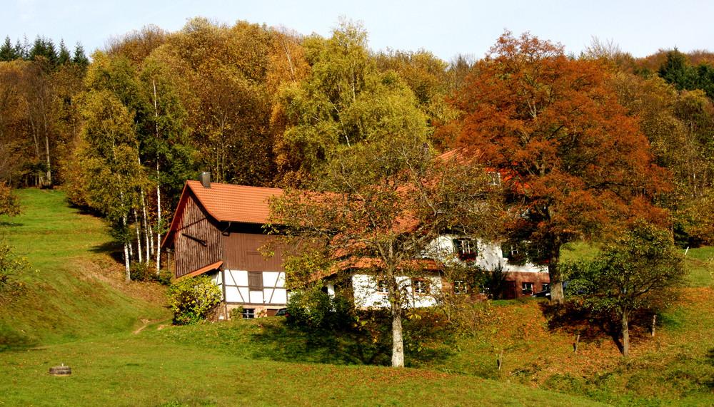 le charme de la Forêt Noire