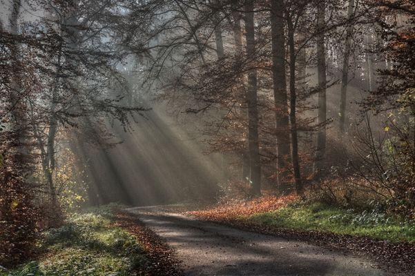 Le charme de l'automne - 3
