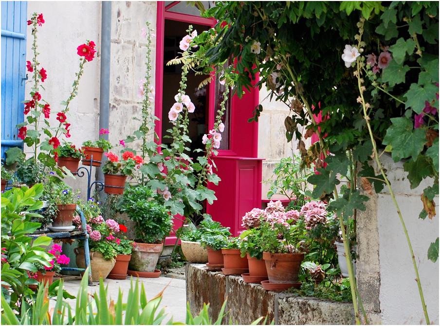 Le charme des roses trémières