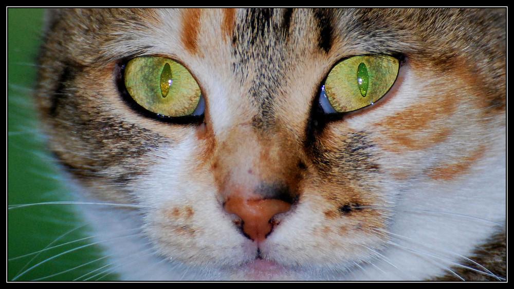 Le chat!
