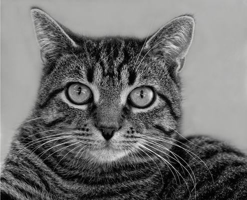 le chat #6