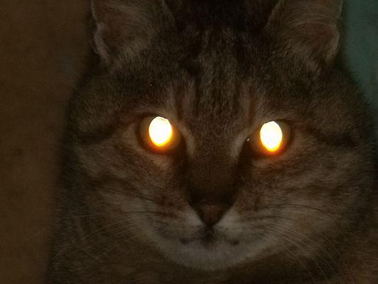 le chat au pouvoir magique