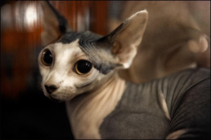 Le chat aux grands yeux