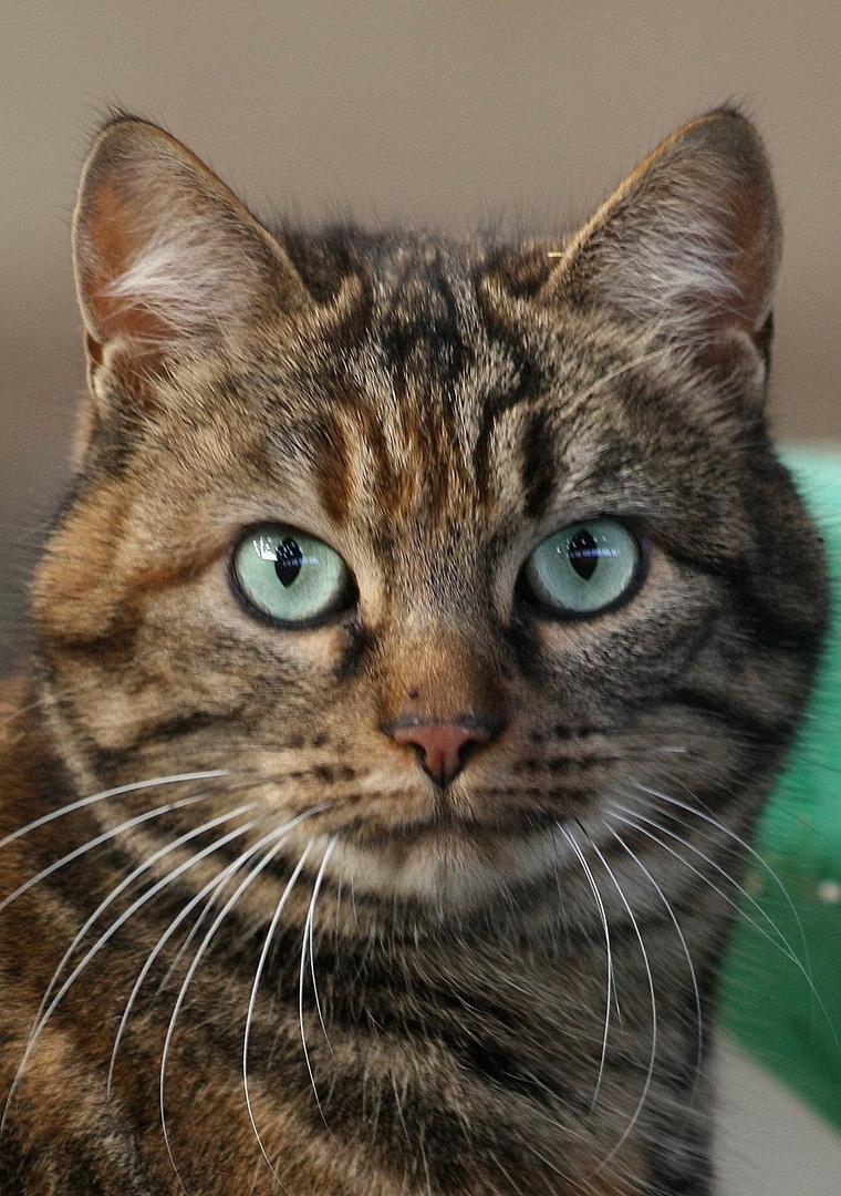 Le chat aux yeux verts