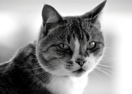Le chat - Balcon