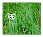 Le chat de Dangu