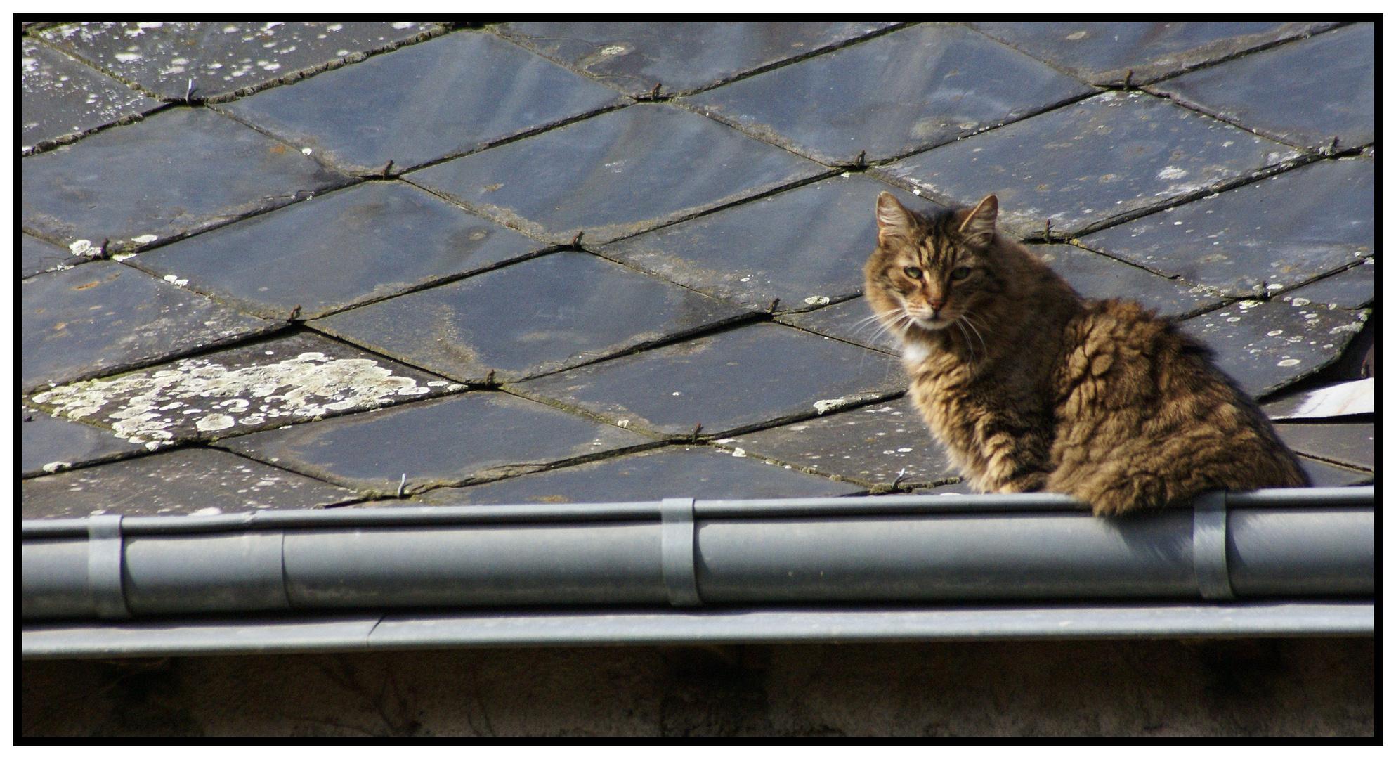 le chat de gouttière.