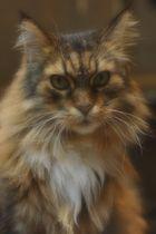 Le chat de l'antiquaire
