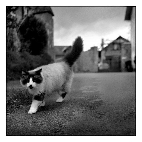 Le Chat des longères