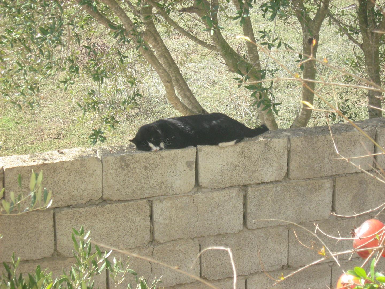 le chat dormant