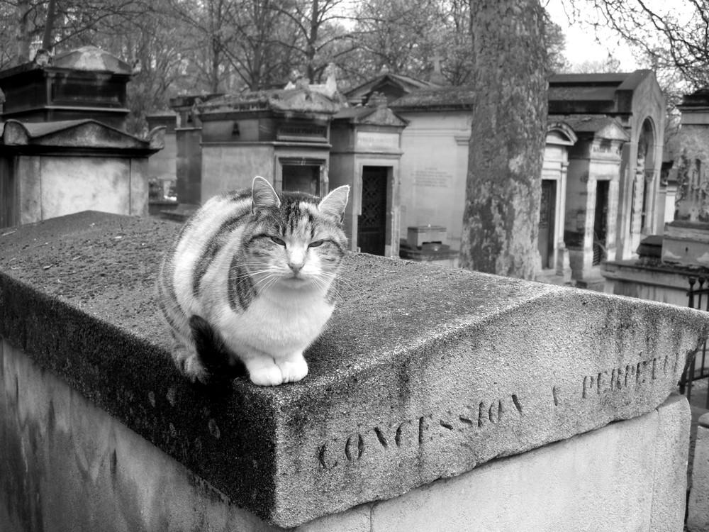 Le chat du necropole