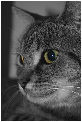 Le chat du voisin