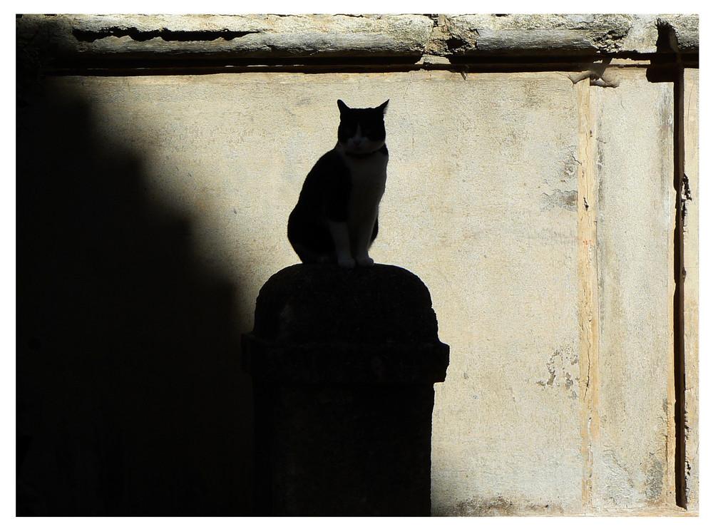 Le Chat d'Uzes